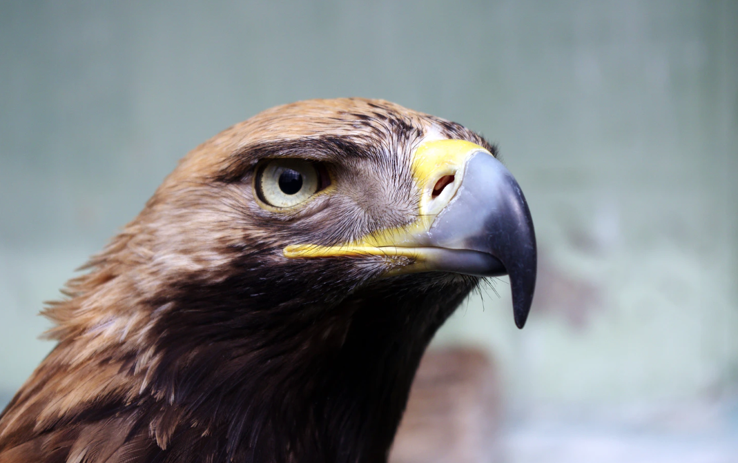 data roaming eagle